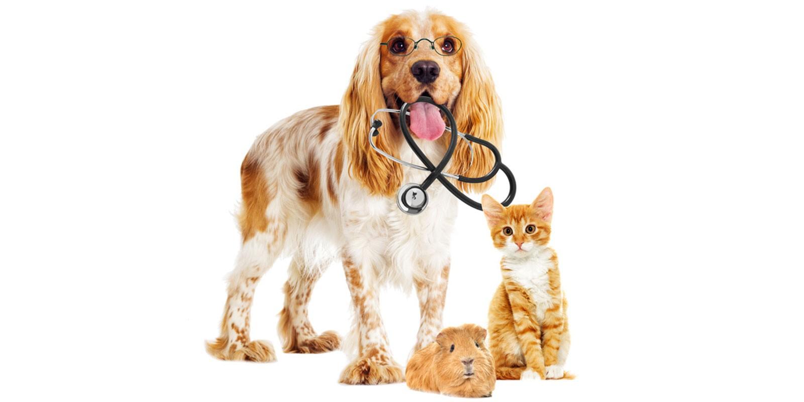 produits-veterinaires-wallers-bellaing-haveluy-helesmes