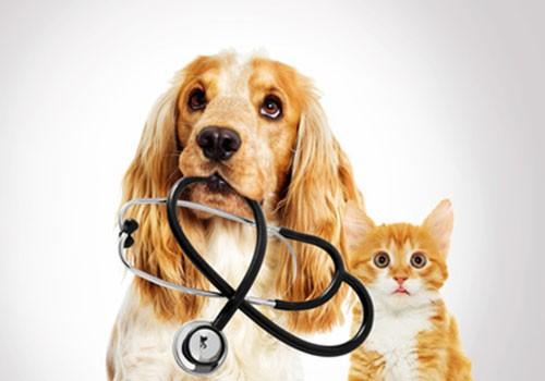 produits-veterinaires-wallers-bellaing-helesmes-haveluy